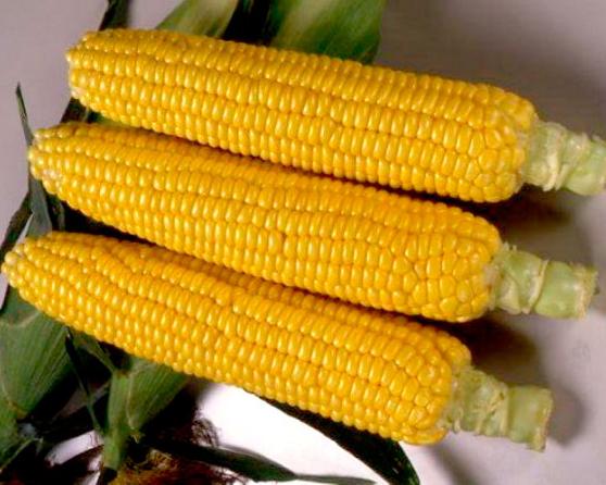 Выращивание кукуруза мегатон f1 25